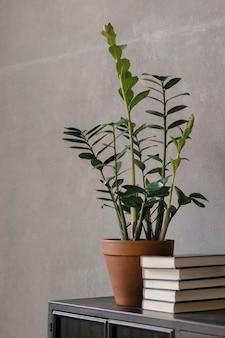 Roślina domowa zamioculcas zamiifolia w doniczce i książki zielone kwiaty w domu i we wnętrzu