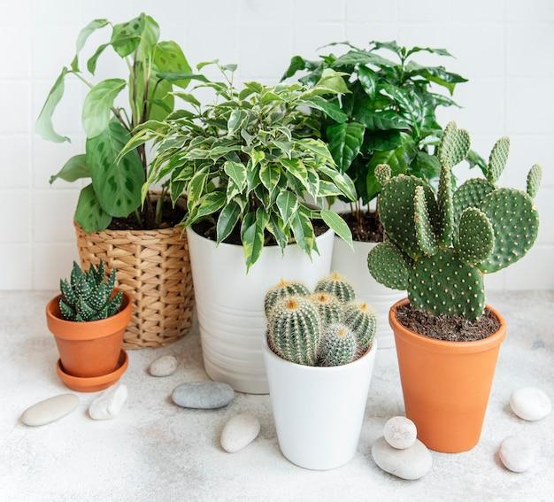 Roślina doniczkowa i kaktus w domu