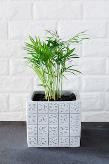 Roślina doniczkowa w pobliżu białej cegły