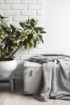 Roślina gumowa ficus elastica w doniczce i szary miękki koc polarowy na białym drewnianym pudełku