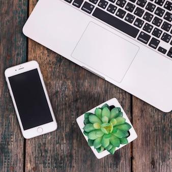 Roślina i smartphone w pobliżu laptopa