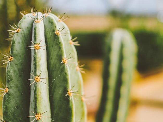 Roślina kaktusowa deserowa