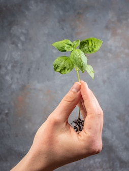 Roślina kiełkuje w dłoni mężczyzny. ekologiczny produkt organiczny, uprawa roślin.