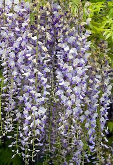 Roślina Kwitnąca