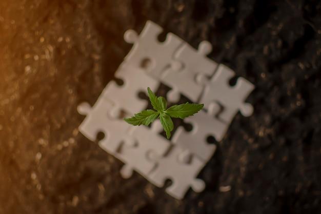 Roślina marihuany rosnąca w stosach pieniędzy. koncepcja biznesowa marihuany.