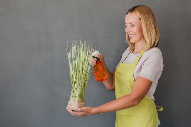 Roślina orzeźwiająca. wesoła dojrzała kobieta w zielonym fartuchu spryskuje wodą roślinę i uśmiecha się