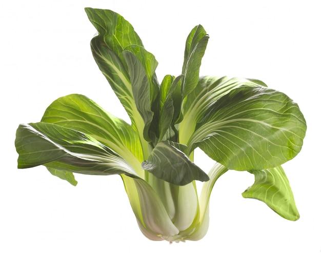 Roślina pak choi, azjatyckie warzywo, gotowe do przyrządzenia