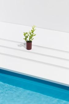 Roślina pod dużym kątem w doniczce obok basenu
