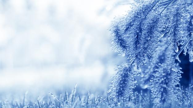 Roślina pokryta lodem. deszcz i mróz, gromadzenie się lodu na roślinach i drzewach. niebezpieczne warunki pogodowe. wspaniałe zimowe tło. makro.