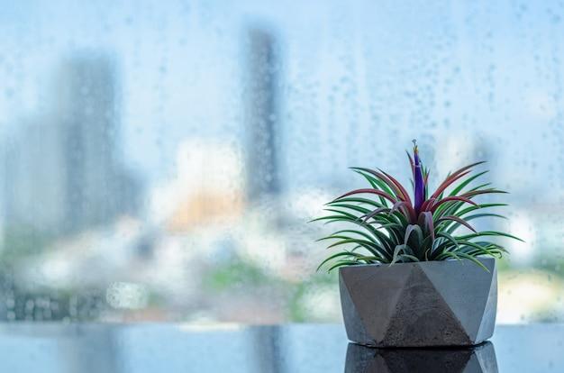 Roślina powietrzna - tillandsia w nowoczesnej doniczce umieszczona obok okna z kroplami deszczu na rozmytym tle miasta.