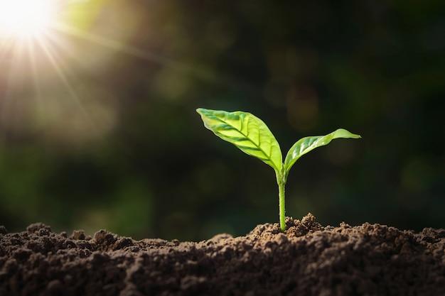 Roślina rosnąca na glebie w słońcu. koncepcja dzień ziemi eko