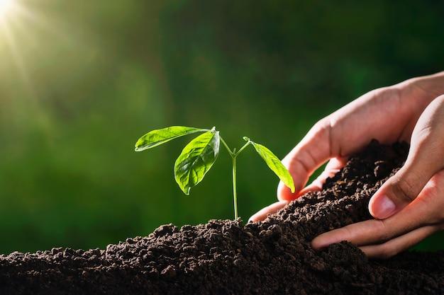 Roślina rośnie ręką i światłem słonecznym w ogrodzie. koncepcja środowiska ekologicznego