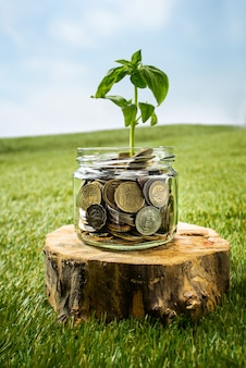 Roślina rośnie w szklanym słoju monety
