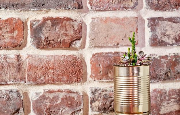 Roślina soczysta doniczkowa w doniczce z puszki. zero odpadów, pomysł na recykling przedmiotów. widok z boku na stary ceglany mur. baner z miejsca na kopię.