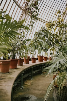 Roślina szklarniowa retro ziarno filmowe, w kew garden, londyn