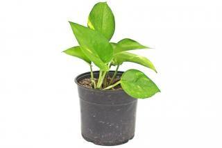 Roślina w doniczce