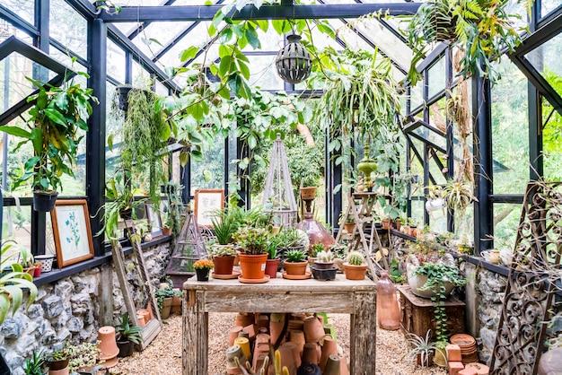 Roślina w szklanym domu