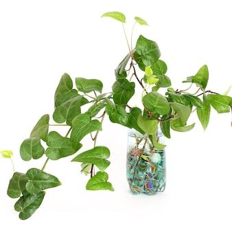 Roślina w wazonie na białym tle.