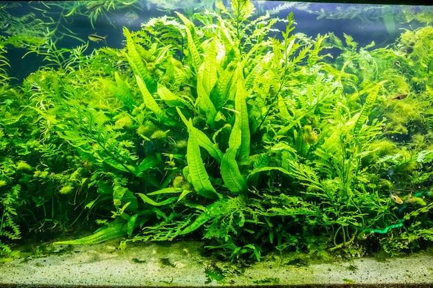 Roślina wodna w zbiorniku akwariowym
