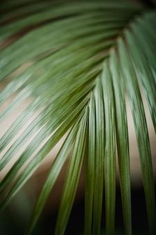 Roślina zielonolistna