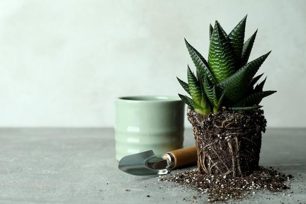 Roślinna, doniczkowa i ogrodowa łopata na szarym stole z teksturą