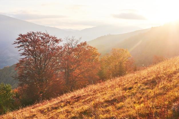 Roślinność góralska skromna latem i niezwykle piękne kolory kwitnie jesienią