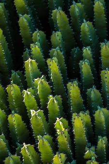 Roślinność kaktusów