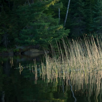 Roślinność rośnie w lake of woods, ontario