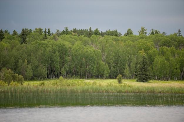 Roślinność wzdłuż linii brzegowej w lake of woods, ontario