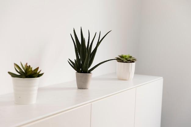 Rośliny biurowe na kredensie