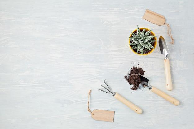 Rośliny domowe i narzędzia ogrodnicze. doniczkowe rośliny domowe na lekkim stole stylowy wewnętrzny ogród. ogrodnictwo domowe, rekreacja lub hobby podczas koncepcji kwarantanny