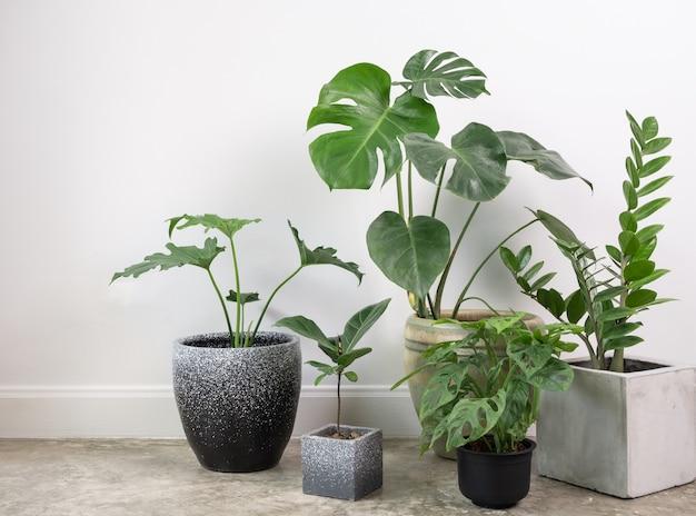 Rośliny domowe oczyszczają naturalne powietrze na cementowej podłodze w pokoju