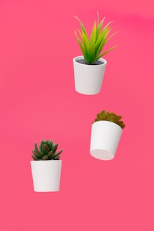 Rośliny domowe, sukulenty zawieszone w powietrzu na kolor tła