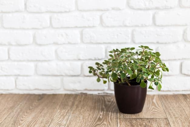 Rośliny domowe. sukulenty