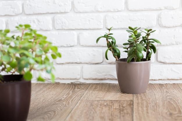 Rośliny domowe sukulenty