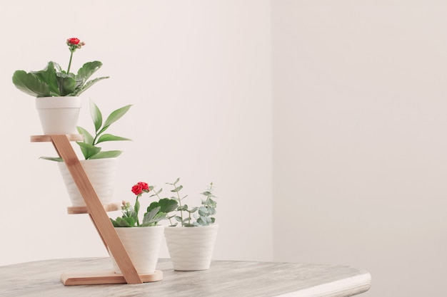 Rośliny doniczkowe przeciwko białej ścianie na drewnianym stole