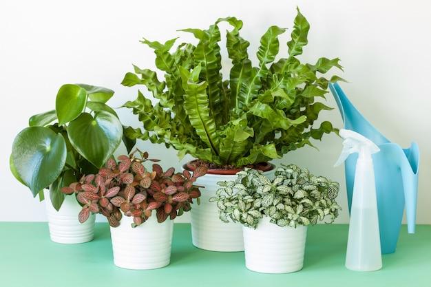 Rośliny doniczkowe w doniczkach