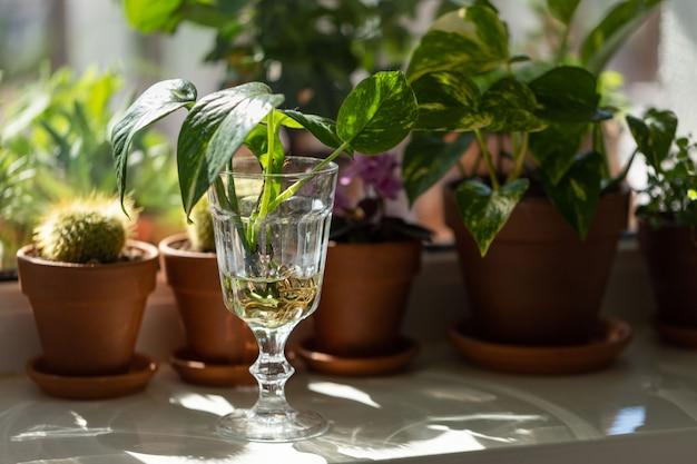 Rośliny doniczkowe w szklanych i glinianych doniczkach na parapecie w domu