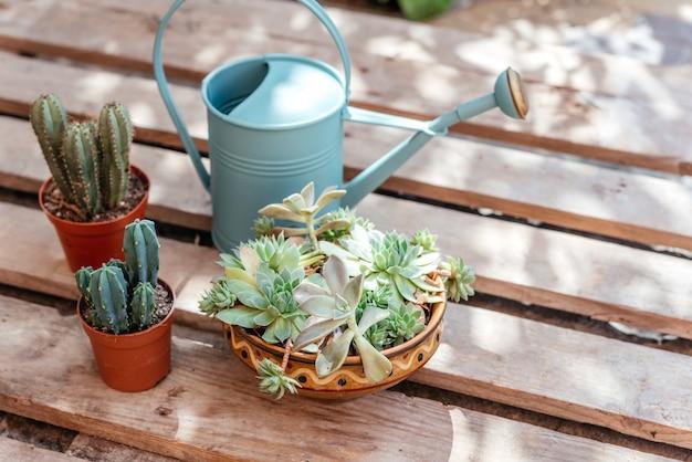 Rośliny doniczkowe wystrój sukulenty kaktusy i konewka na drewnianym tle
