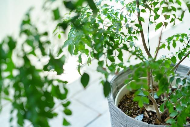 Rośliny doniczkowe z liśćmi umieszczone w pobliżu okna