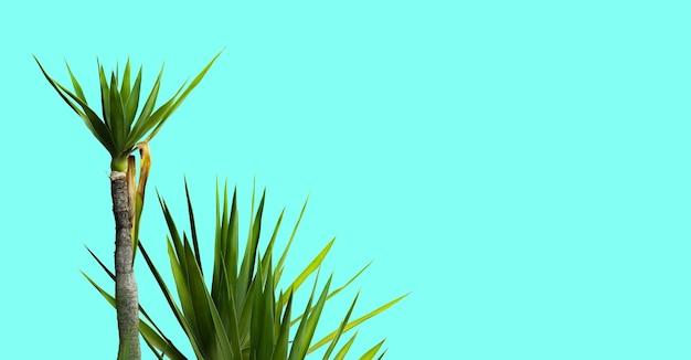 Rośliny izolowane na turkusowym tle