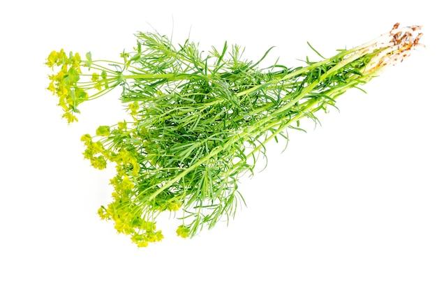 Rośliny lecznicze, zioła na białym tle.