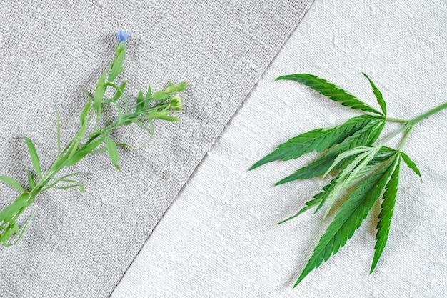 Rośliny lnu i konopi na starym samodziałowym płótnie lnianym i konopnym