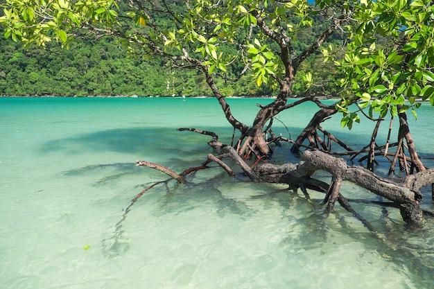 Rośliny mangrowe