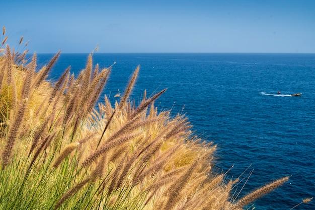 Rośliny na południowym wybrzeżu gran canarias
