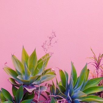 Rośliny na różowym koncepcji. kanarek zielony na różowym tle ściany.