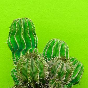 Rośliny na zielonej koncepcji minimalnej mody. kaktus na zielonej ścianie w tle