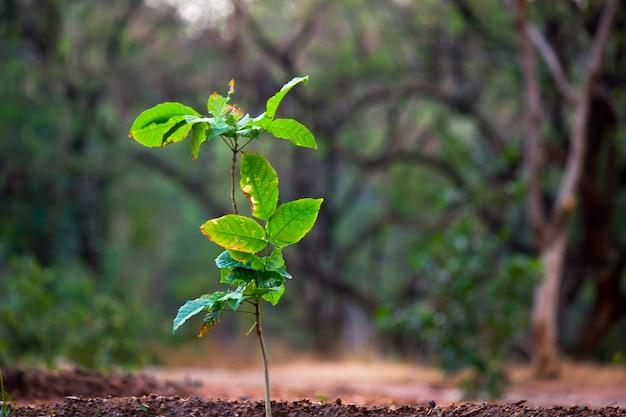 Rośliny odbijające naturalne światło słoneczne w ciągu dnia na ciemnym tle
