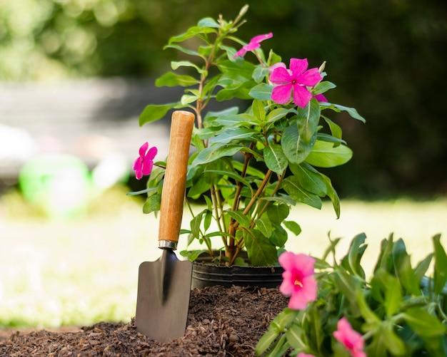 Rośliny ogrodnicze narzędzia z bliska