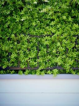 Rośliny ogrodowe do ściany